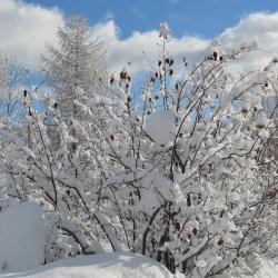 Lendemain de chutes de neige